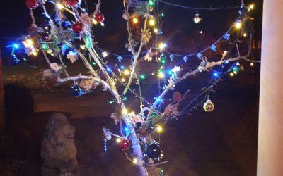 Christmas trees from Brigg Inner Wheel